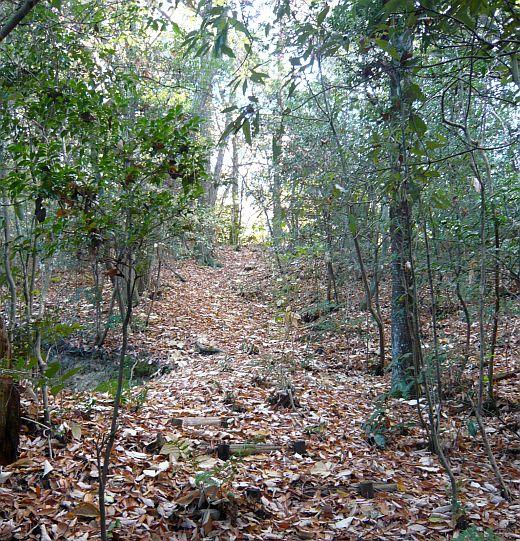 キャンプ大阪の枯葉林-1
