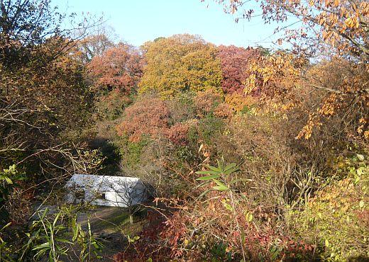 キャンプ大阪の紅葉景色2008