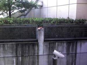 品川駅港南口(猫ちゃん)
