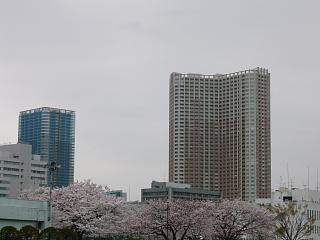 桜(その6)
