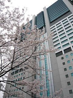 桜(その9)