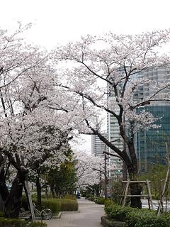 桜(その10)