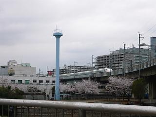 桜(その12)
