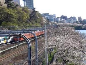 桜(飯田橋2)