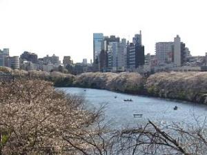 桜(飯田橋3)