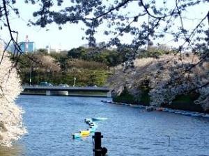 桜(千鳥ヶ淵14)