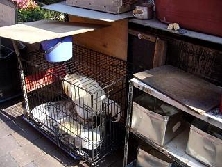 アヒルのコンビニ(鶏)