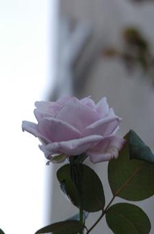 bluemoon2008930-4.jpg
