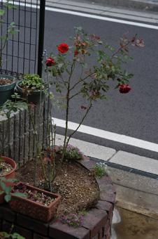 colorbreak20081110.jpg