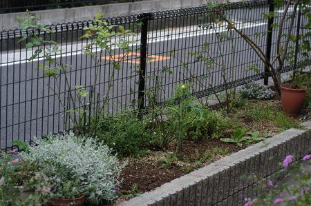 fence20081102-2.jpg