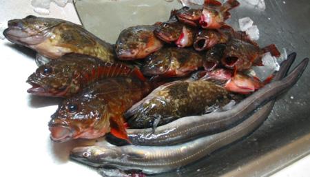 fish20081212-1.jpg