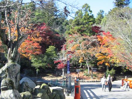 miyajima20081201-14.jpg