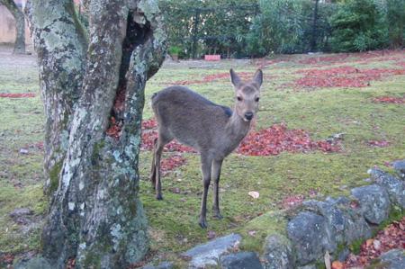 miyajima20081201-5.jpg