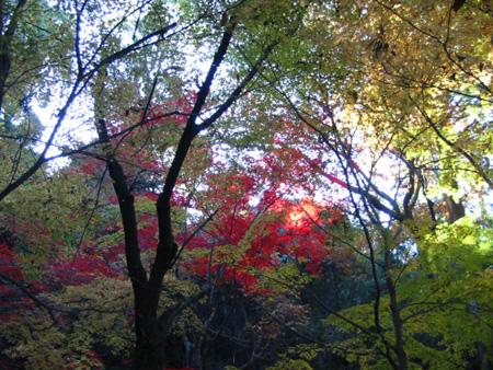 miyajima20081201-8.jpg