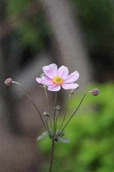 shumeigiku2009923-3.jpg