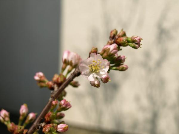待ちに待った春到来~。。。