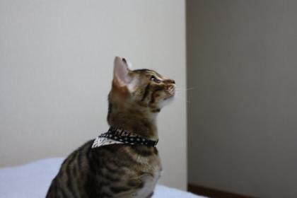 sasukexxx240.jpg
