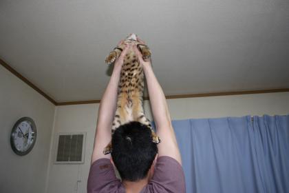 sasukexxx546.jpg