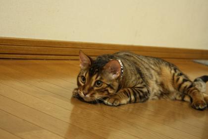 sasukexxx604.jpg