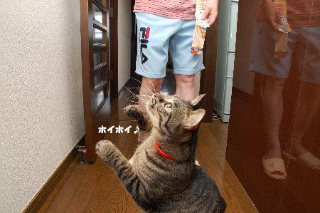 20090901kotetsu2.jpg