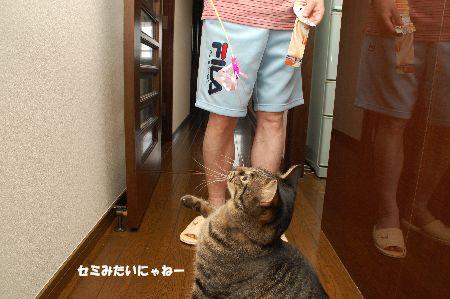 20090901kotetsu3.jpg