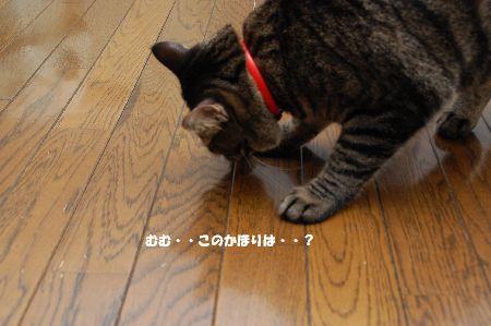 20090904kotetsu2.jpg