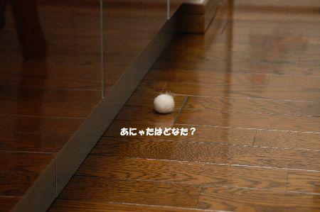 20090904kotetsu3.jpg