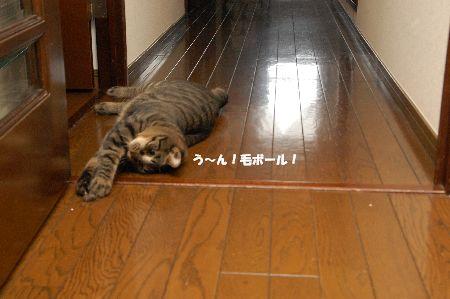 20090908kotetsu.jpg