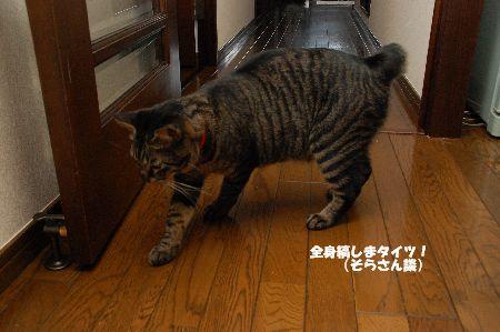 20090908kotetsu3.jpg