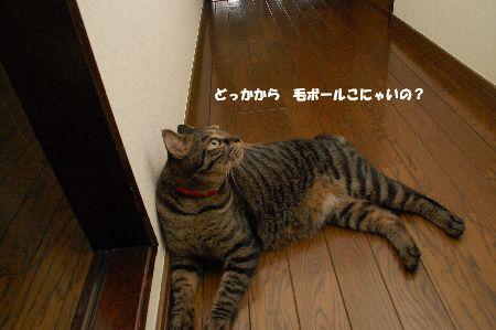 20090908kotetsu4.jpg