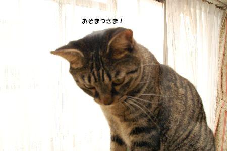 20090911kotetsu5.jpg