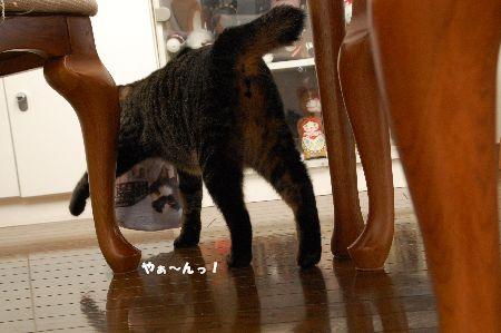 20090913kotetsu4.jpg