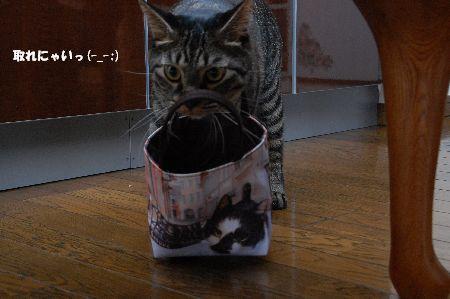 20090913kotetsu5.jpg