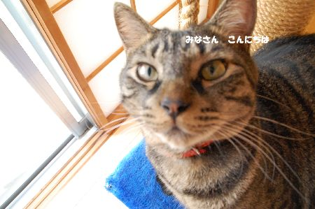 20090917kotetsu.jpg