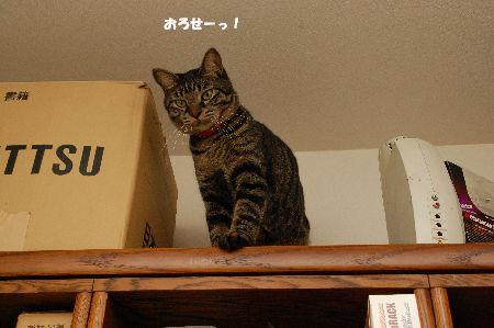 20090917kotetsu2.jpg