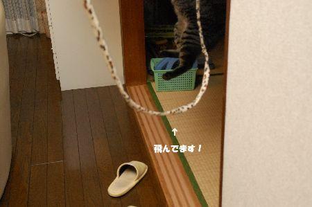 20090918kotetsu7.jpg