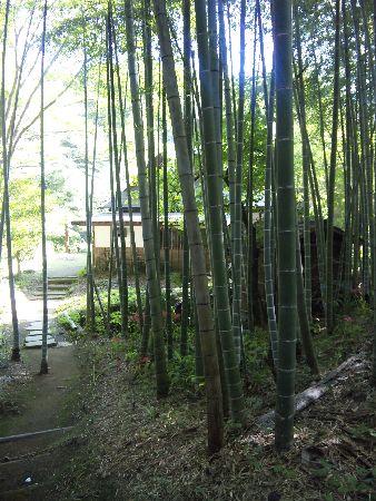 20090921nanasawa6.jpg
