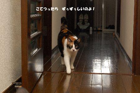 20091007mikan.jpg