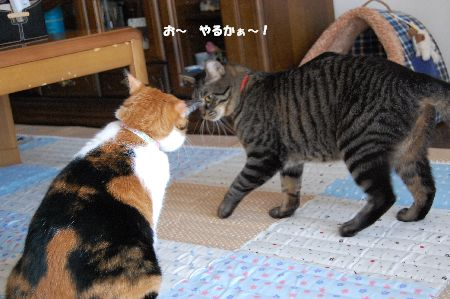 20091020mikankotetsu.jpg