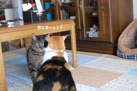 20091020mikankotetsu2.jpg