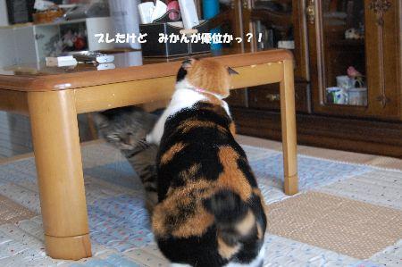20091020mikankotetsu3.jpg
