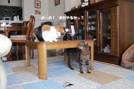 20091020mikankotetsu4.jpg