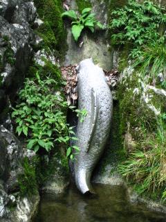 絹掛けの滝 5