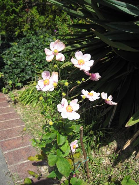 イギリス庭園 6