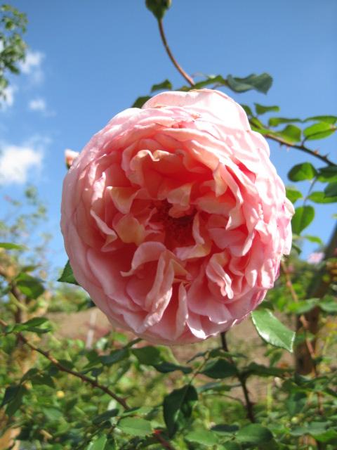 イギリス庭園 15