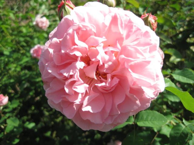 イギリス庭園 18