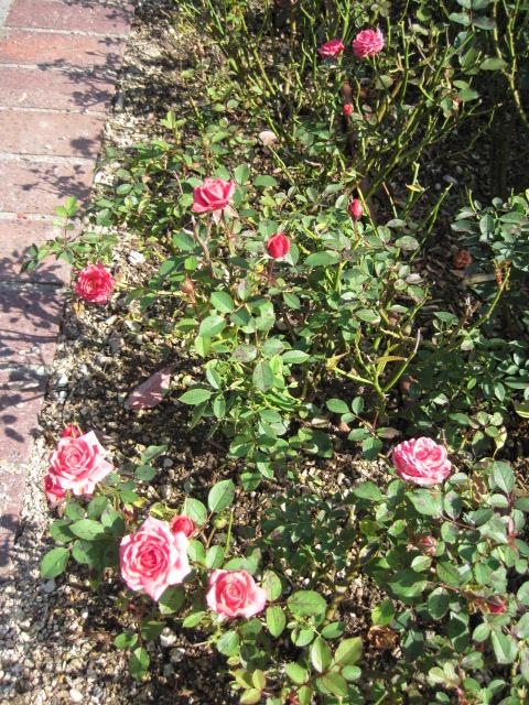 イギリス庭園 22