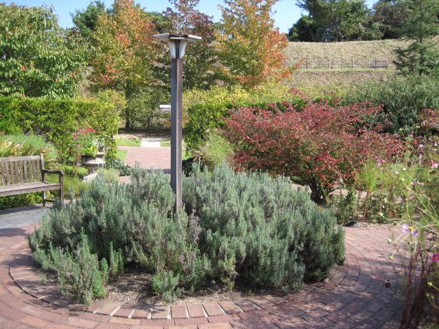 イギリス庭園 28
