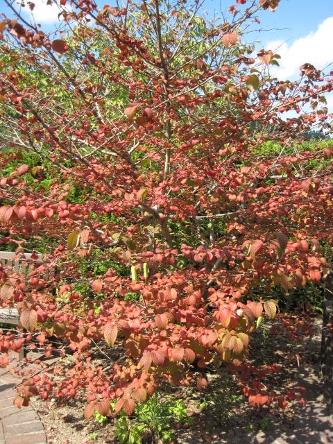 イギリス庭園 31