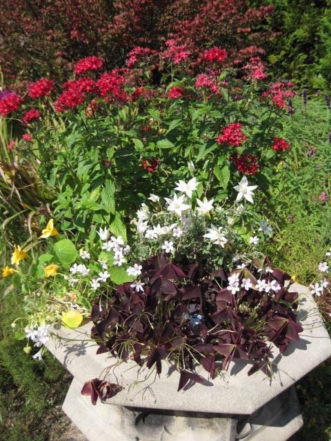 イギリス庭園 32